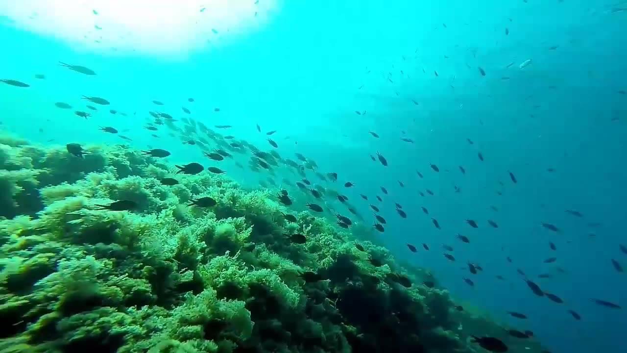 Snorkel en Calacerrada.