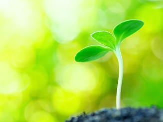 Cannabis & Our Carbon Footprint
