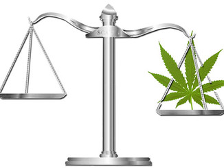 Cannabis Illegality and Policing a Plant