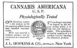 The Health Consequences of Keeping Cannabis Illegal