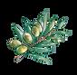 sourire_sucré_cuisine_olivier-min.png