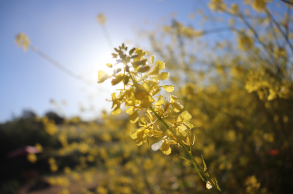 Mishlyn Verdon Spirit Guide Cambria Eleutheria retreats Mustard in the Sunshine Cambria.png