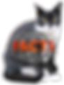 cat facts & trivia