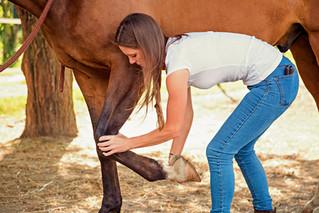 Warum Pferdeosteopathie?