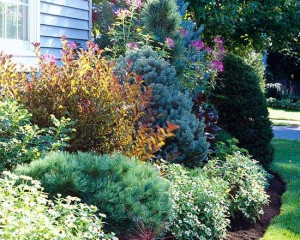 Year Round Landscaping Idea