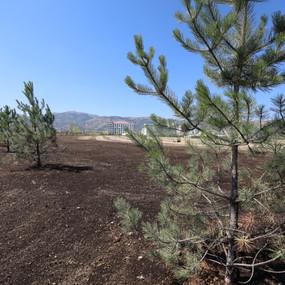Afyon Motor Sporları Merkezi'ne 3 bin ağaç daha dikildi
