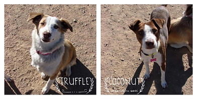 truffle coconut.jpg