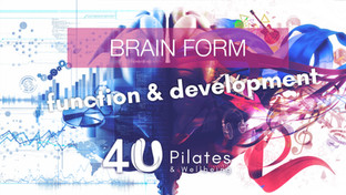 Form, function and development of the brain