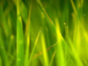 Tall Grass Wallpapers 08.jpg