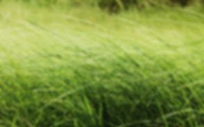 Tall Grass Wallpapers 05.jpg