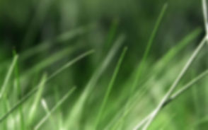 Tall Grass Wallpapers 10.jpg