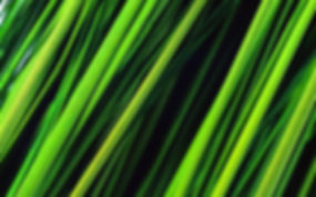 Tall Grass Wallpapers 06.jpg