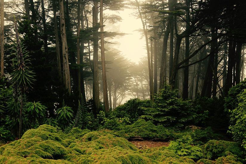 magical-forest-scene-in-new-zealand.jpg