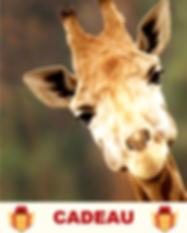 10_Muscler ses oreilles Girafe_cadeau.pn