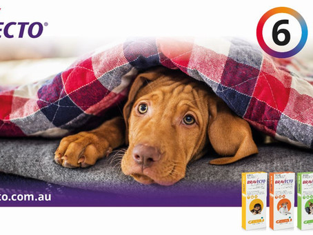 New Bravecto Spot On - 6 months Protection Against Ticks and Fleas For Dogs