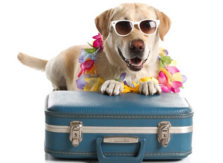 Going On Holidays? Wondering who should look after your pets while you're away?