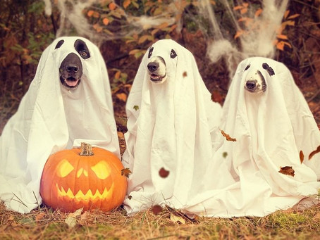 Keeping Your Pet Safe on Halloween