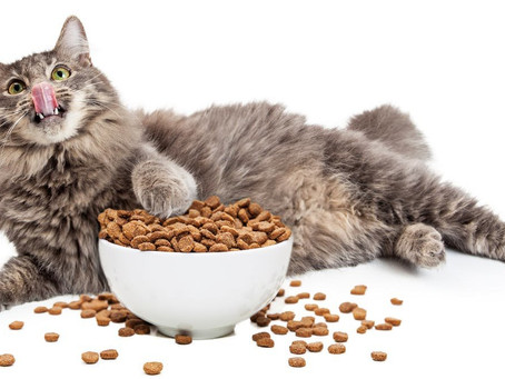 How much food does my pet actually need?