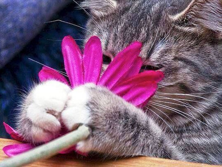 How a bunch of Flowers could be life Threatening to your Cat!