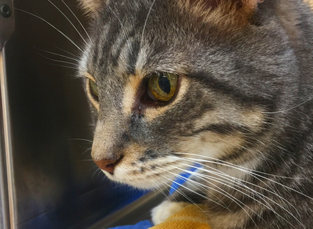Could Your Cat Be Diabetic?
