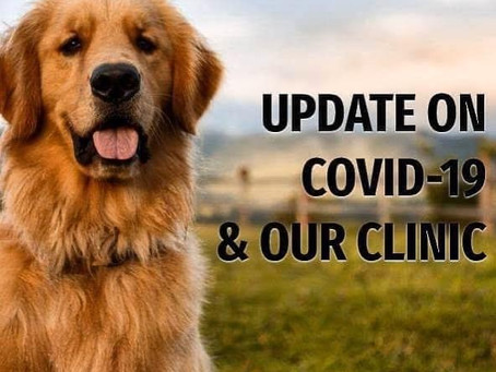 COVID-19 Update - July/August 2021