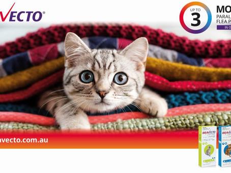 Bravecto - Tick and Flea Prevention for Cats