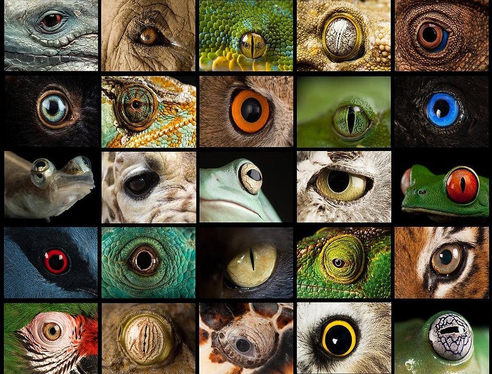 Eyes_1000_Lid_WR_1024x1024.jpg