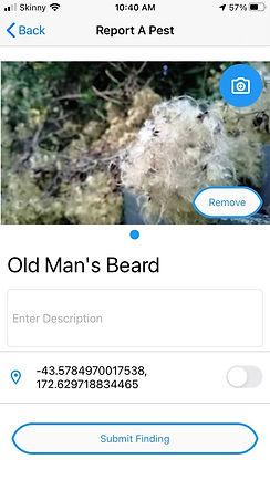 old mans beard observation submission screenshot.jpg