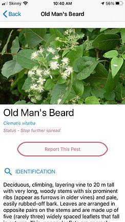old mans beard submission screenshot.jpg