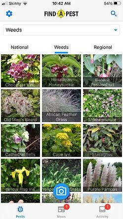 weeds screenshot w.jpg