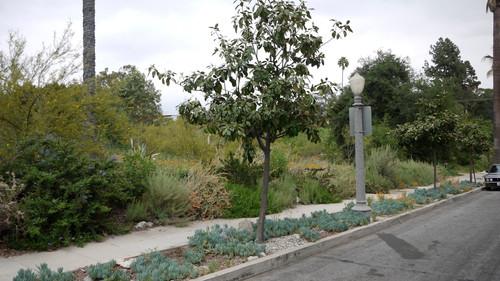 Arlington Garden, Parkway Rain Gardens