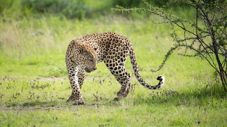 Kyle de Nobrega Botswana (9).jpg