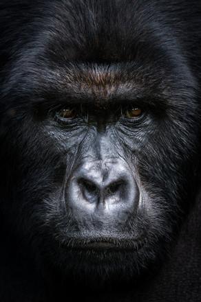 Kyle de Nobrega Virunga National Park (1