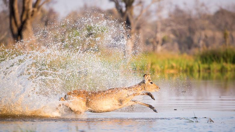 Kyle de Nobrega Botswana (6).jpg