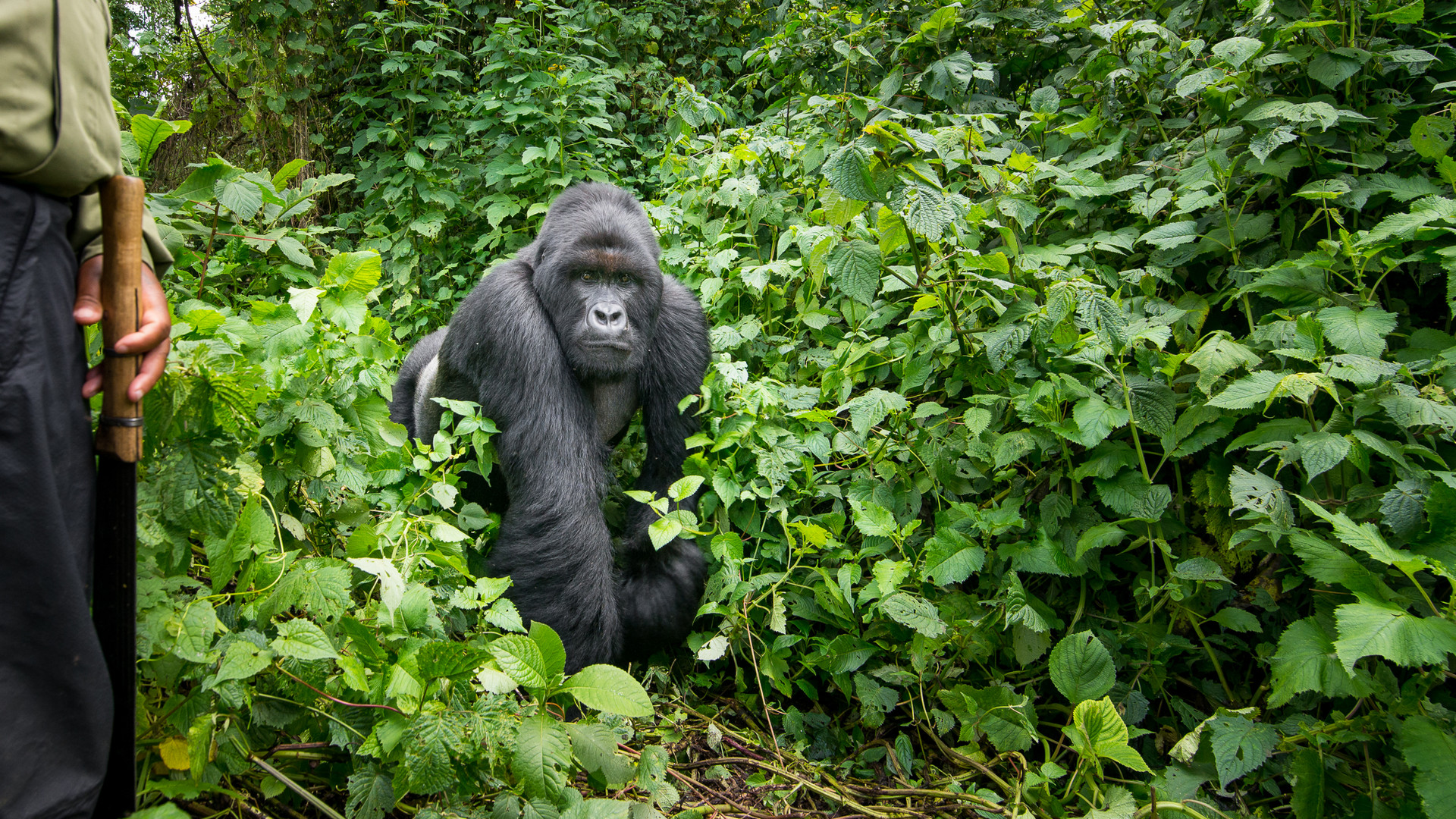 Kyle de Nobrega Virunga National Park (2