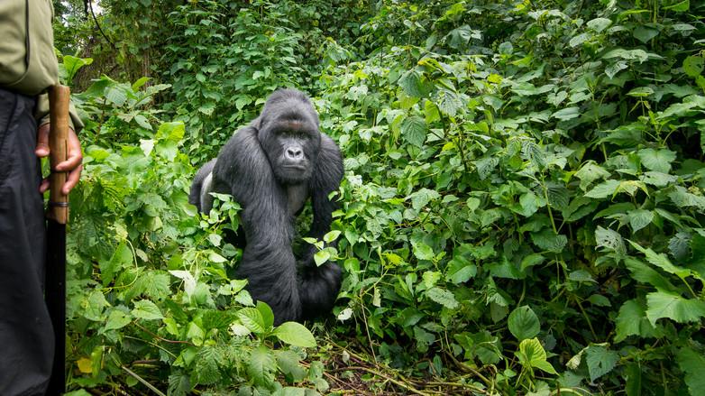 Kyle de Nobrega Virunga National Park (2