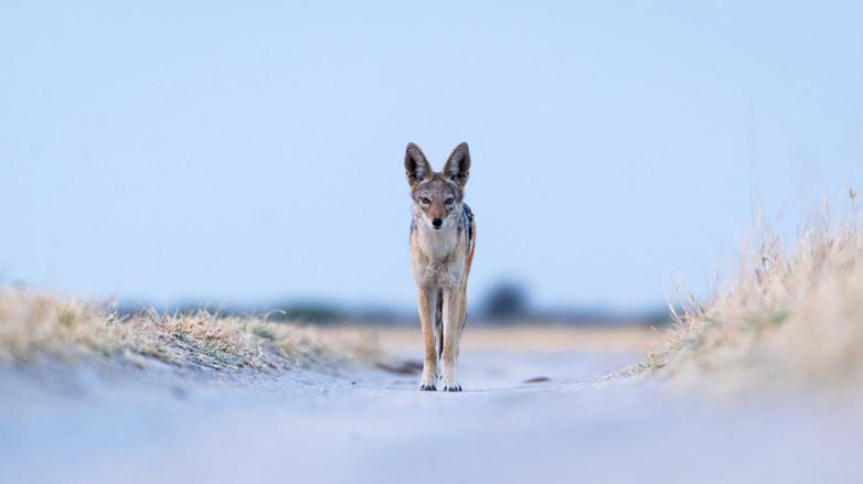 Kyle de Nobrega Botswana (5).jpg