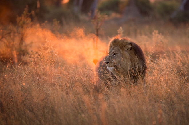 Kyle de Nobrega Botswana (14).jpg
