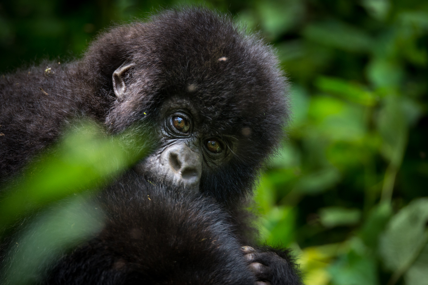 Kyle de Nobrega Virunga National Park (1