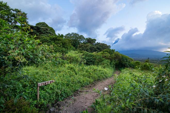 Kyle de Nobrega Virunga National Park (4