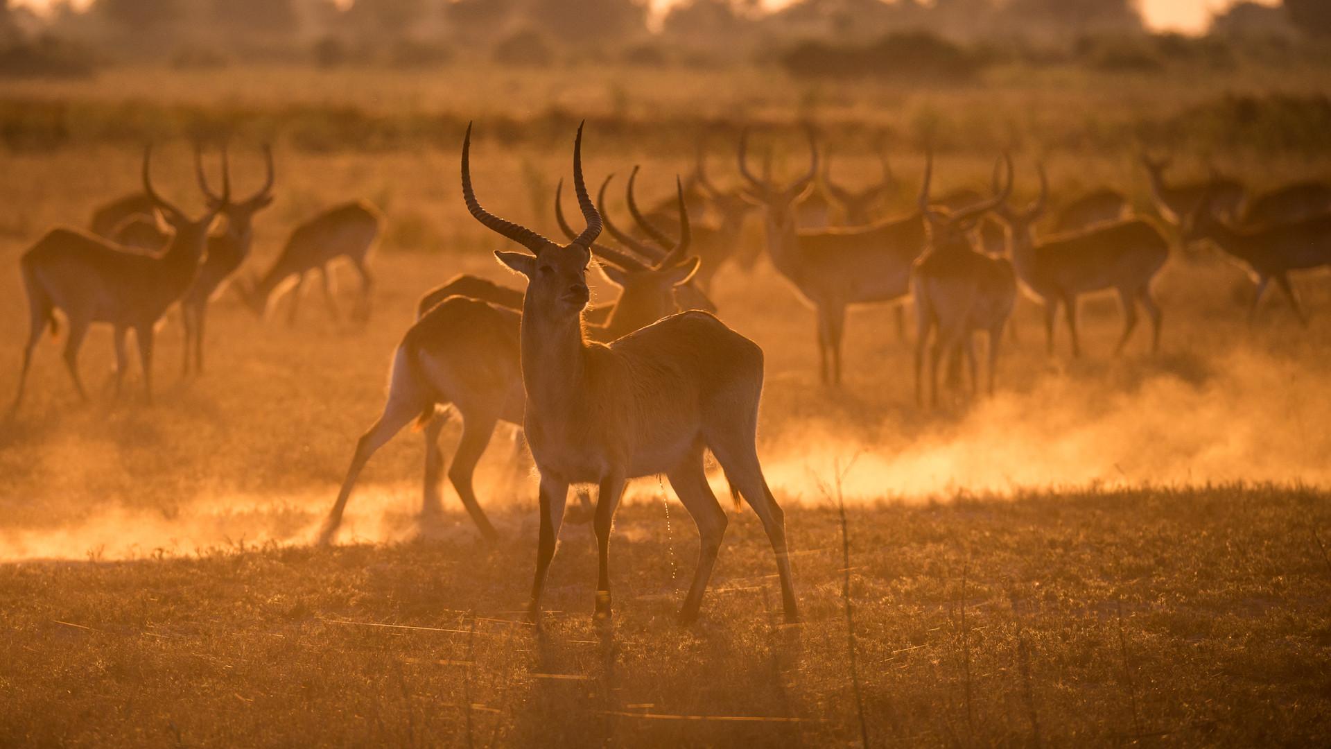 Kyle de Nobrega Botswana (1).jpg