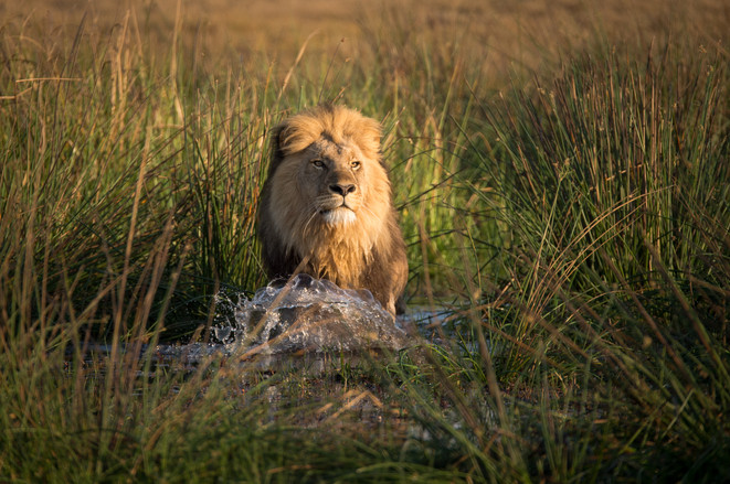 Kyle de Nobrega Botswana (2).jpg