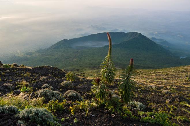 Kyle de Nobrega Virunga National Park (9