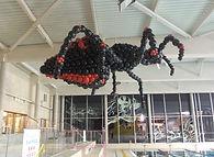 araignée .jpg