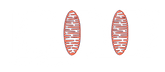 ICDD_LOGO_WHT.png