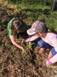Annual-tree-planting-plugndrivenz