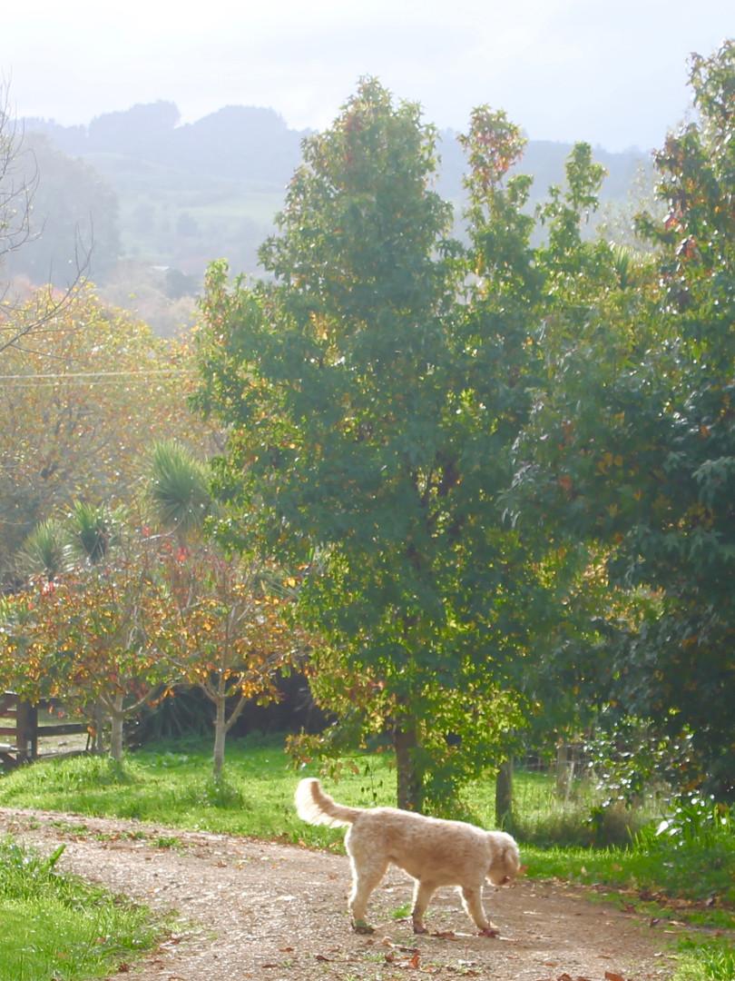 Autumn at Ararimu Gardens