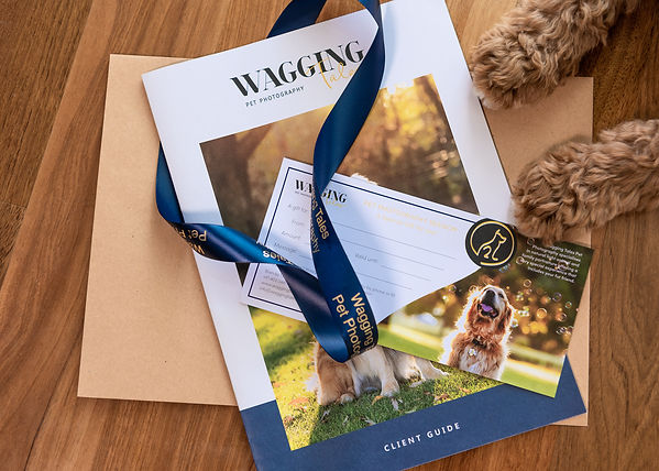 Wagging Tales Pet Photography Gift Certificates