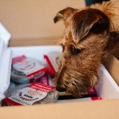 Benyfit Raw Natural Dog Food