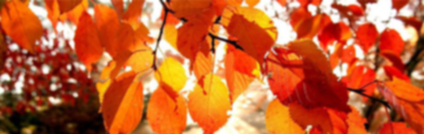 FallLeaves2.png